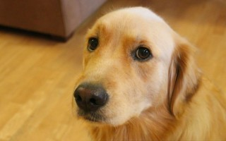 Jodies Dog Rehoming